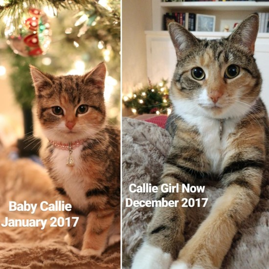 Callie Girl, Year 1